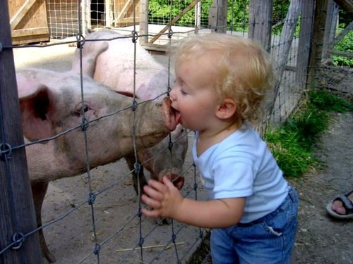 Toddler_kissing_pig