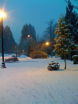 Snow-seattle
